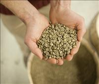 Starbucks Jamaica Blue Mountain Coffee Beans - Credit Starbucks Inc.